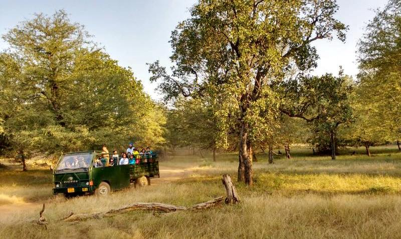 Canter Safari in Ranthambore National Park