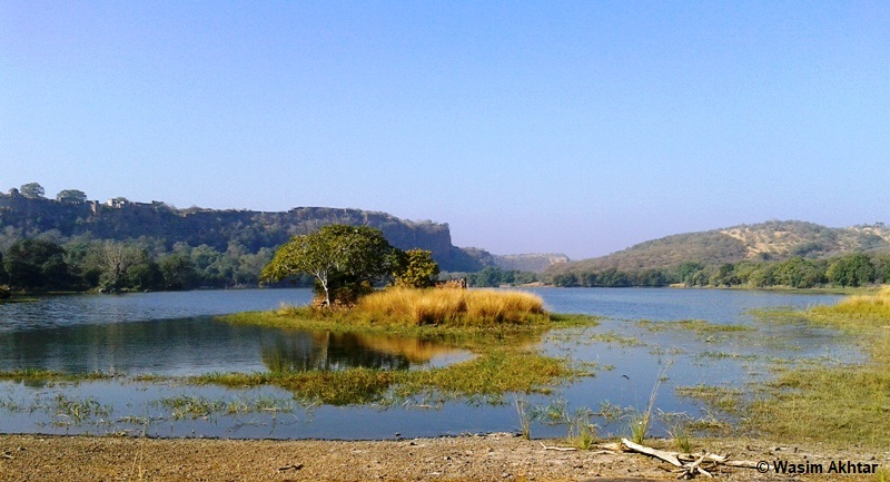 Padam Lake Ranthambore National Park