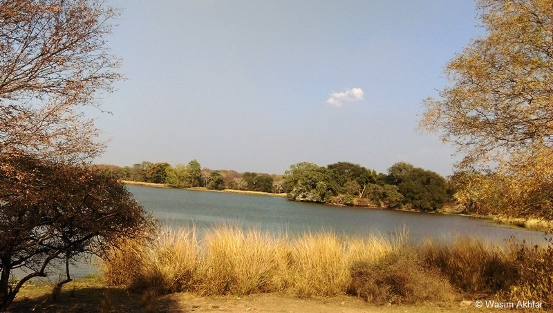 Beautiful Lake in Ranthambore National Park