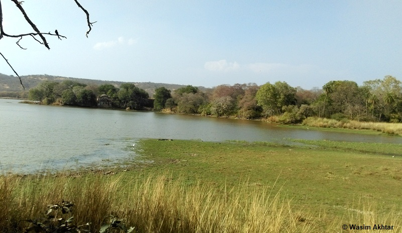 Scenic view of the Ranthambore National Park