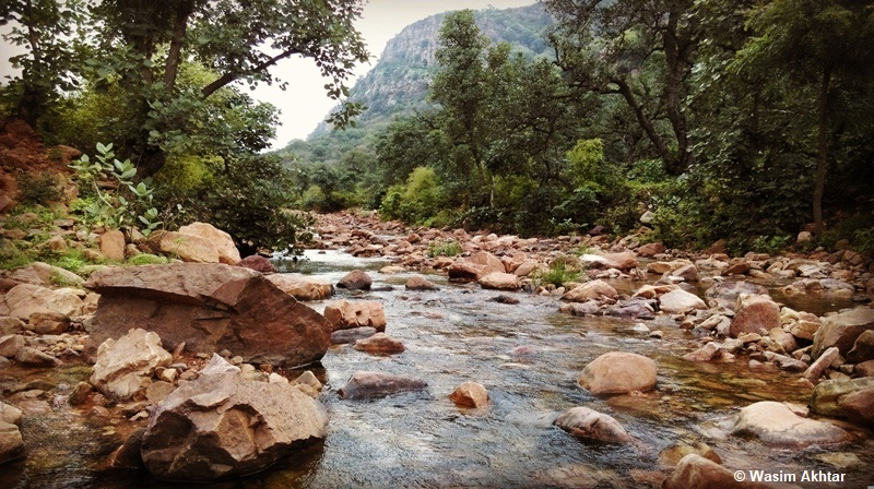 Stream in Monsoon season - Ranthambore