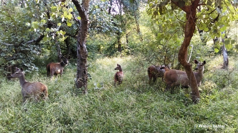 Deer in Ranthambore National Park