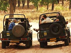 Ranthambore Odyssey Tour