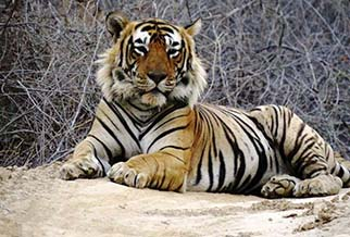 Ranthambore Special wildlife packages