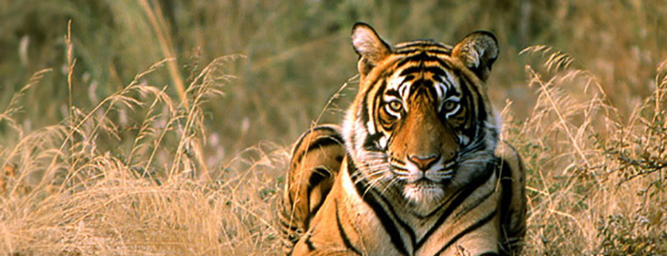 Ranthambore Tour Packages 2 Nights 3 Days