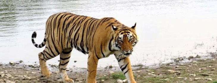 Ranthambore Tour Packages 5 Nights 6 Days