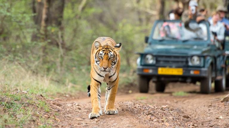 Ranthambore-National-Park