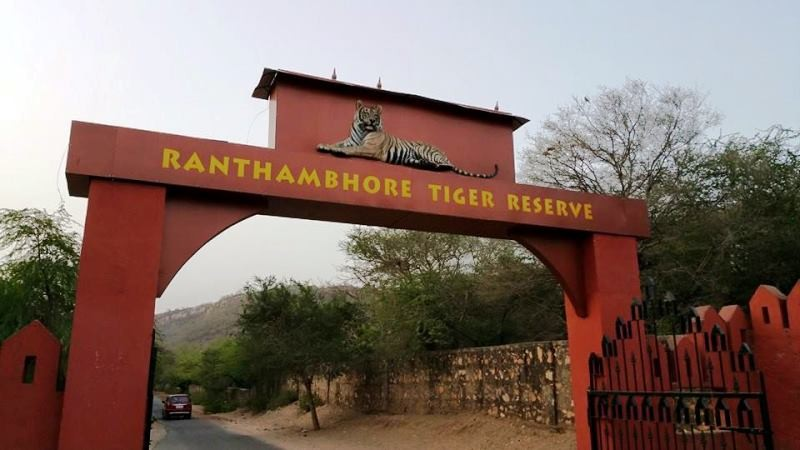 Ranthambore was voted India's best wildlife destination at the India Today Award