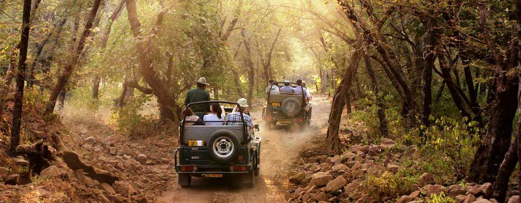ranthambhore safari timings
